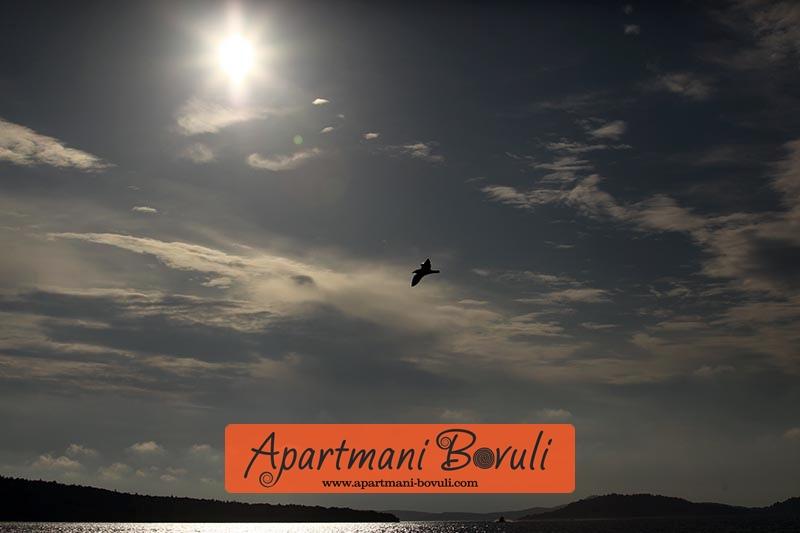 [apartmani_bovuli]88
